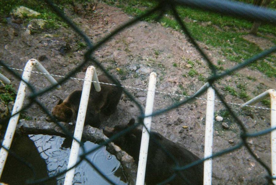 Bears by Kooskia