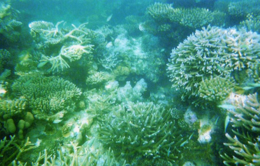 Coral Reef 1 - Photo 8 Maldives by Kooskia