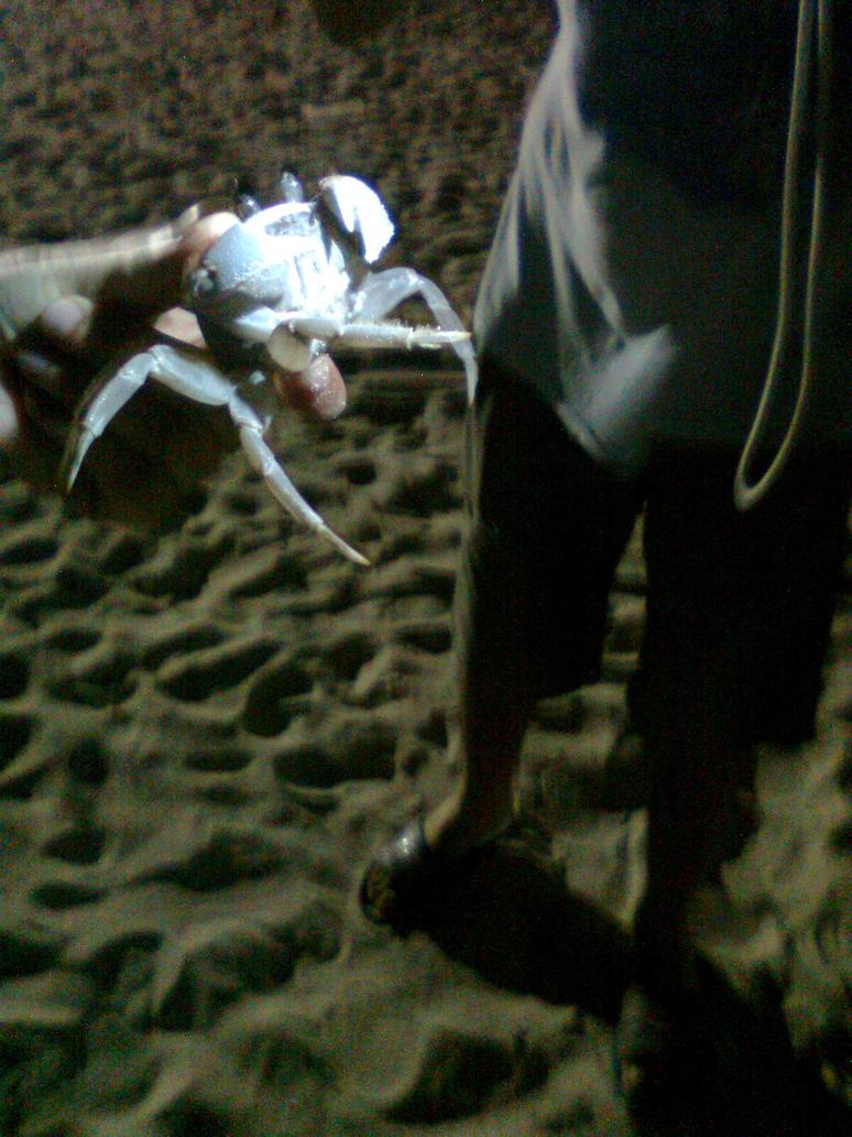 Big crab  Photo 21 - Maldives by Kooskia