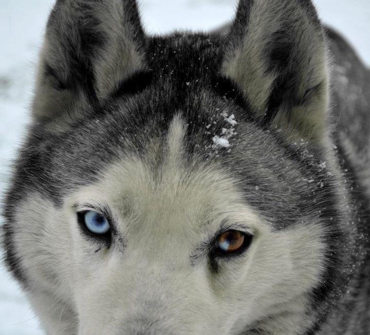 Ice eyes by Kooskia