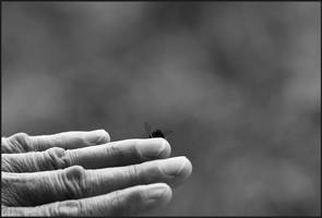 Finger fly by TheSpenner