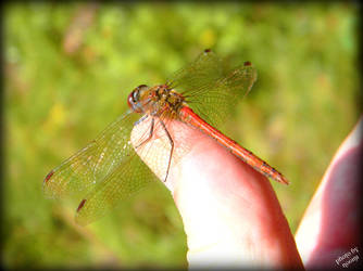 Dragonfly On My Thumb by Grandmagoingnuts