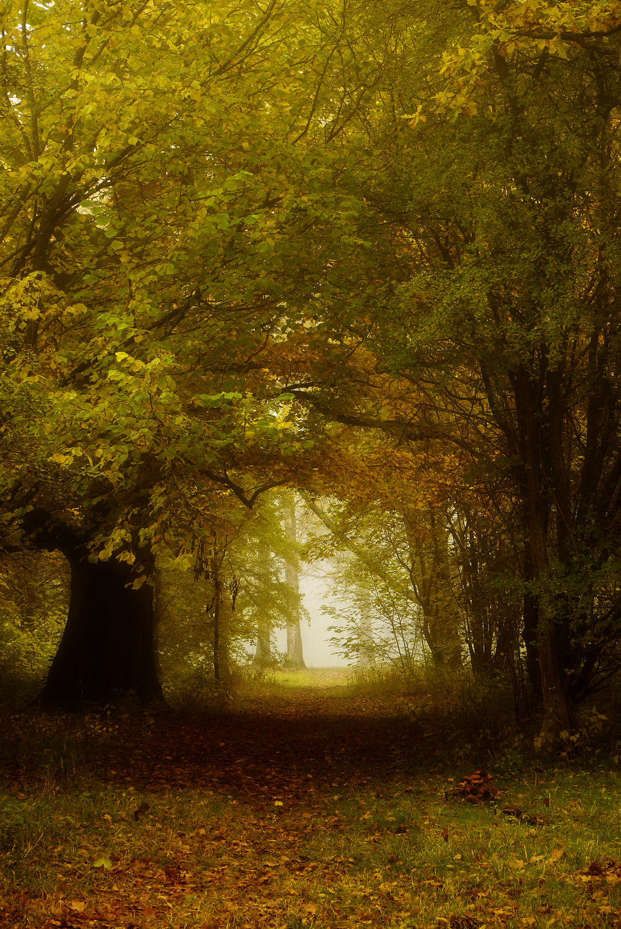 Entrance To Autumn by Grandmagoingnuts
