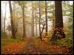 Autumn forest 2 by mjagiellicz