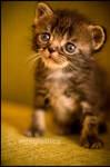 Hello kitty by mjagiellicz