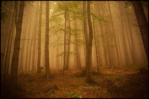 Autumn comes by mjagiellicz