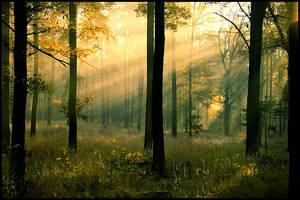 Fall breathe 2 by mjagiellicz