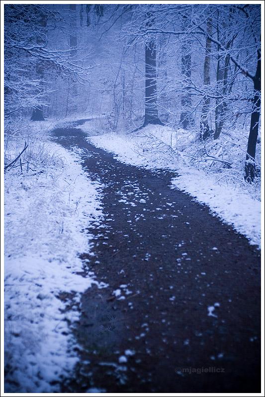 Winter wonderland by mjagiellicz