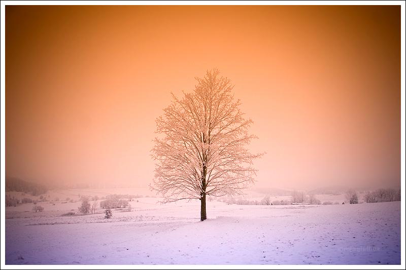 Winter postcard 2008 by mjagiellicz