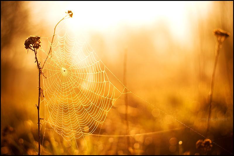 Spider-web by mjagiellicz
