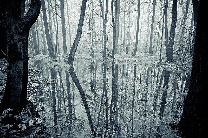Spring forest by mjagiellicz