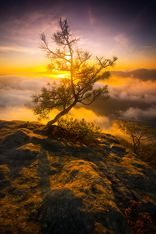 Magic tree by mjagiellicz