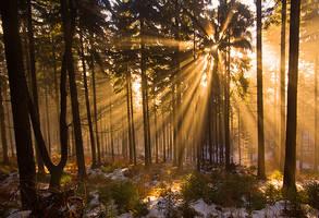 Winter light by mjagiellicz