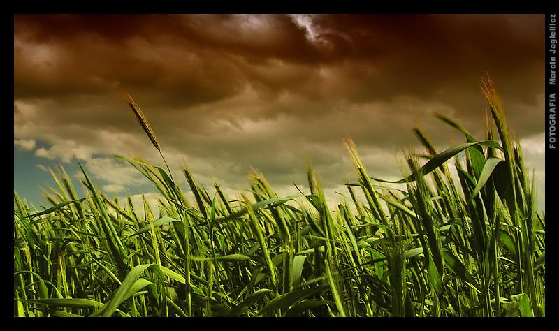 The wind by mjagiellicz