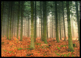 Just forest by mjagiellicz