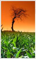 Lonely tree by mjagiellicz