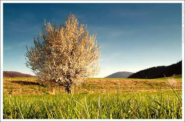 Spring tree by mjagiellicz