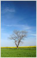 Spring by mjagiellicz