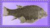 Norwegian Fossil Fish by Urceola
