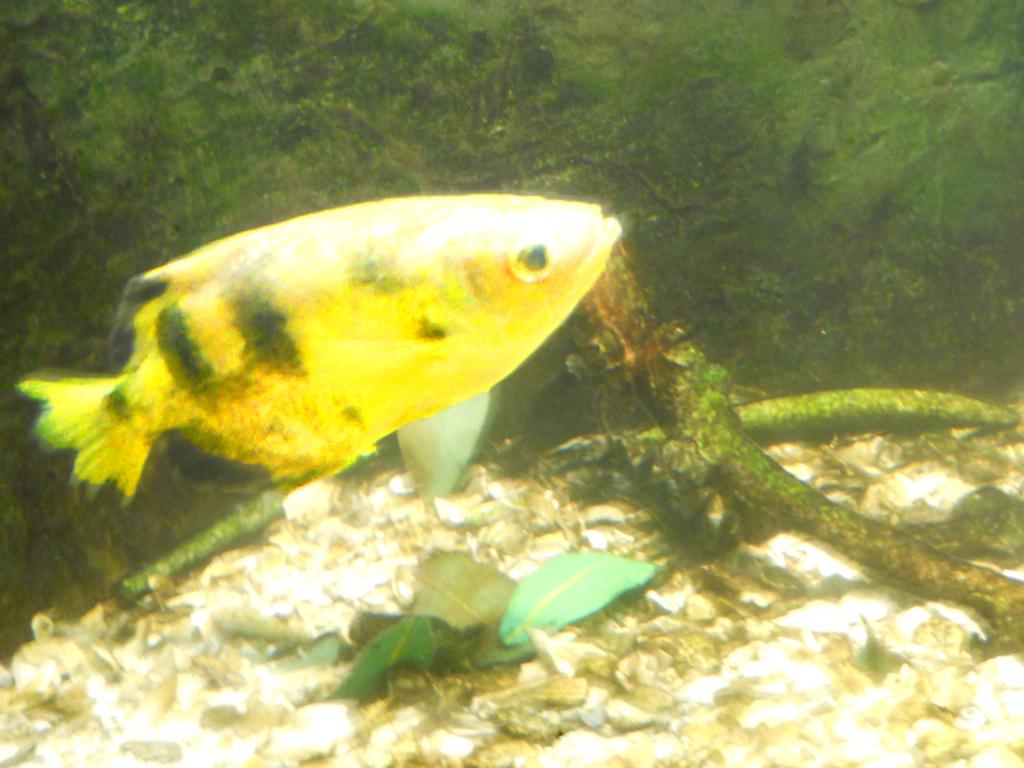Freshwater aquarium fish milwaukee - Milwaukee Zoo Fish By Urceola