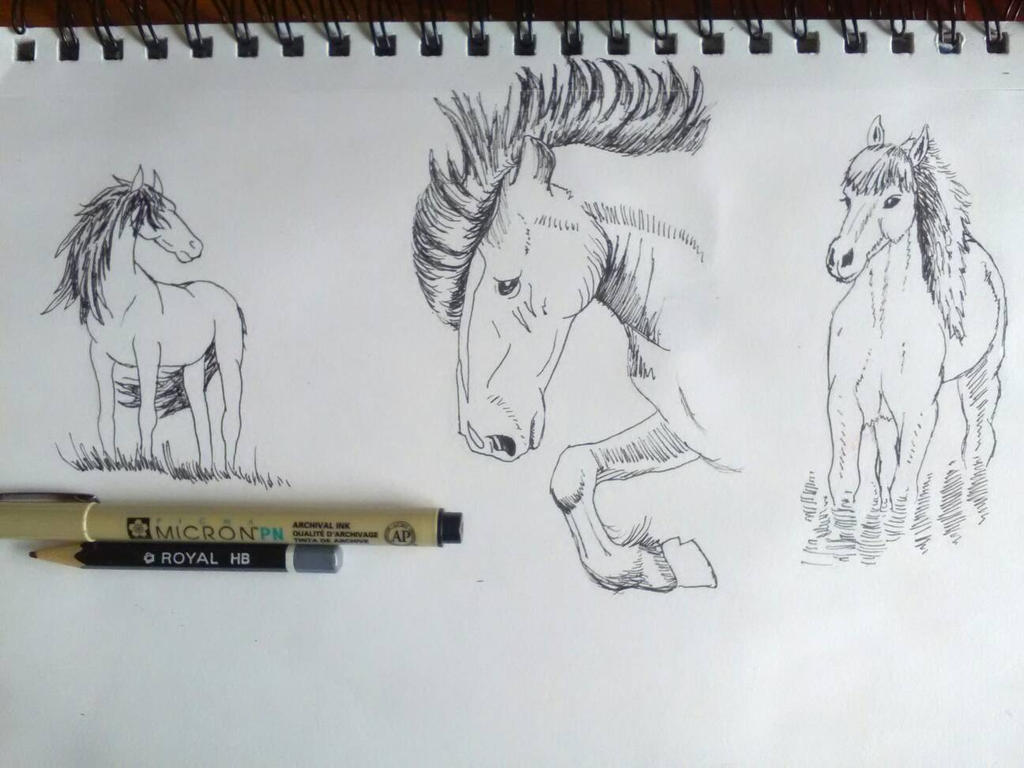 horse studies by Crystella4
