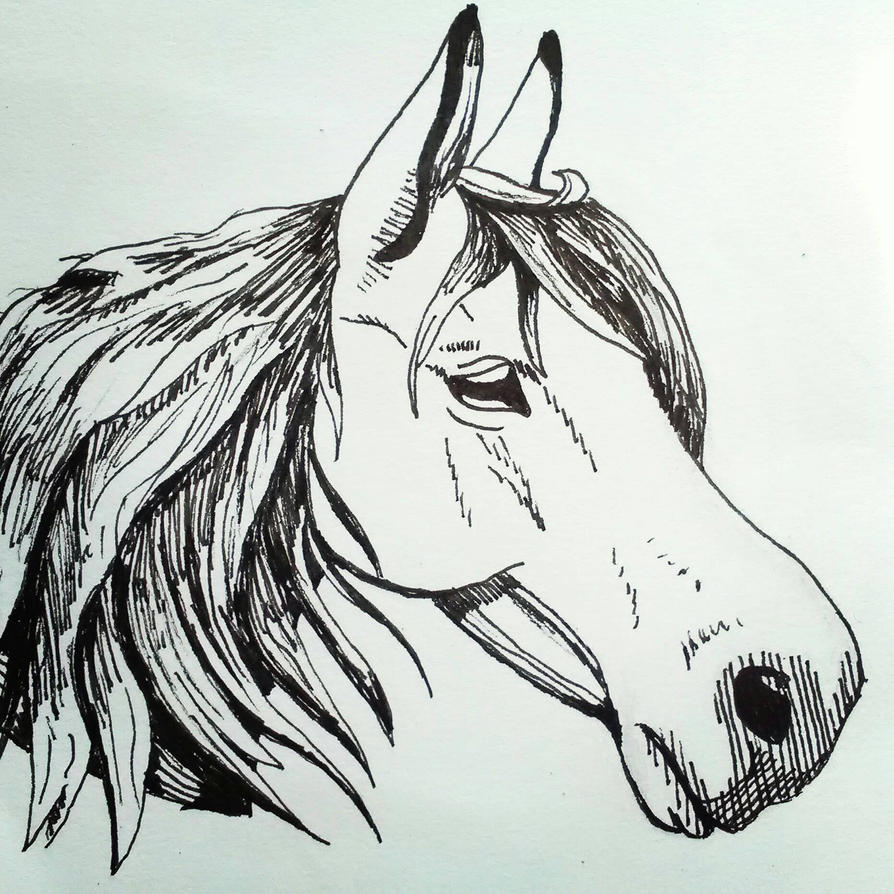 horse sketch by Crystella4