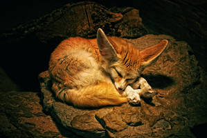 desert fox by Ceecore