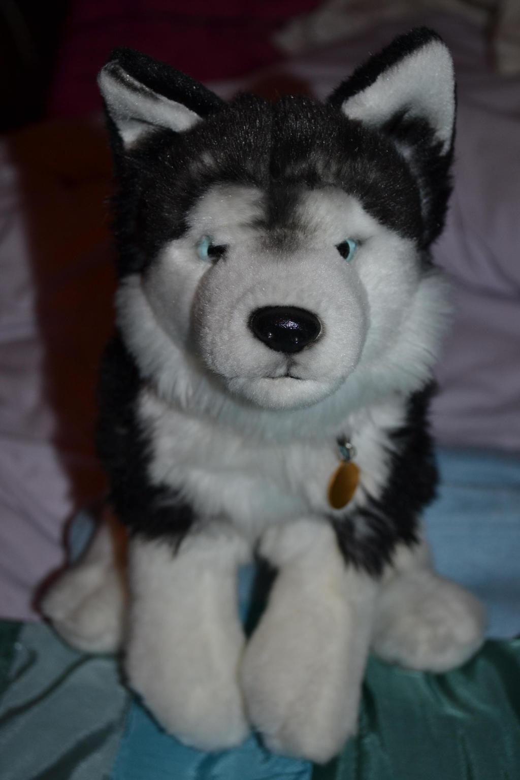 Webkinz Signature Siberian Husky by huskylover221 on