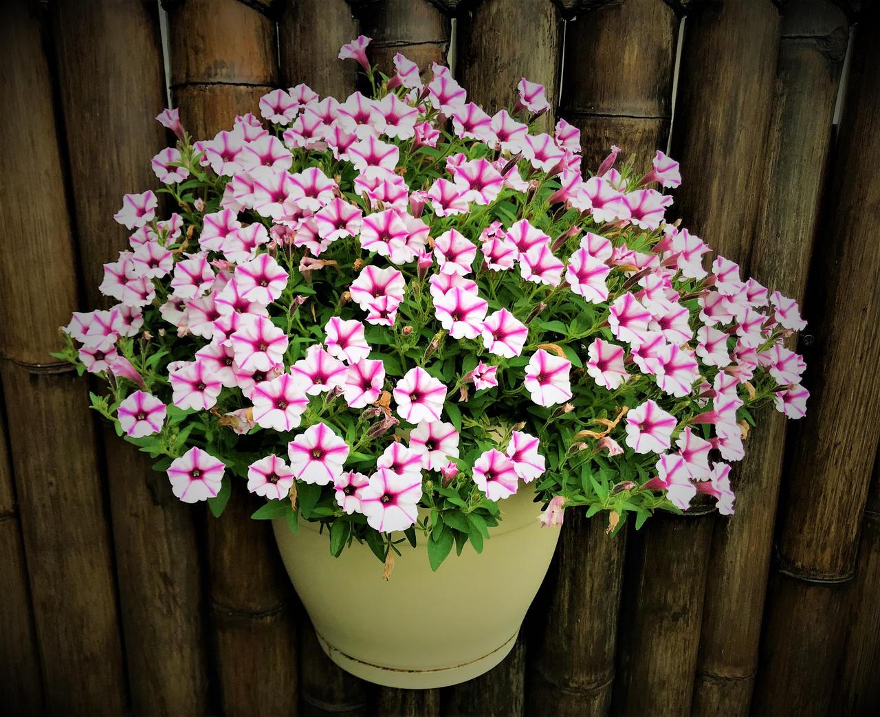 Garden Flowers 1b