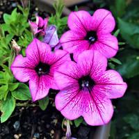 Garden Photos 1c
