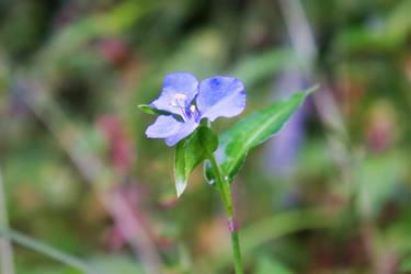 Kondalilla National Park Flower 2