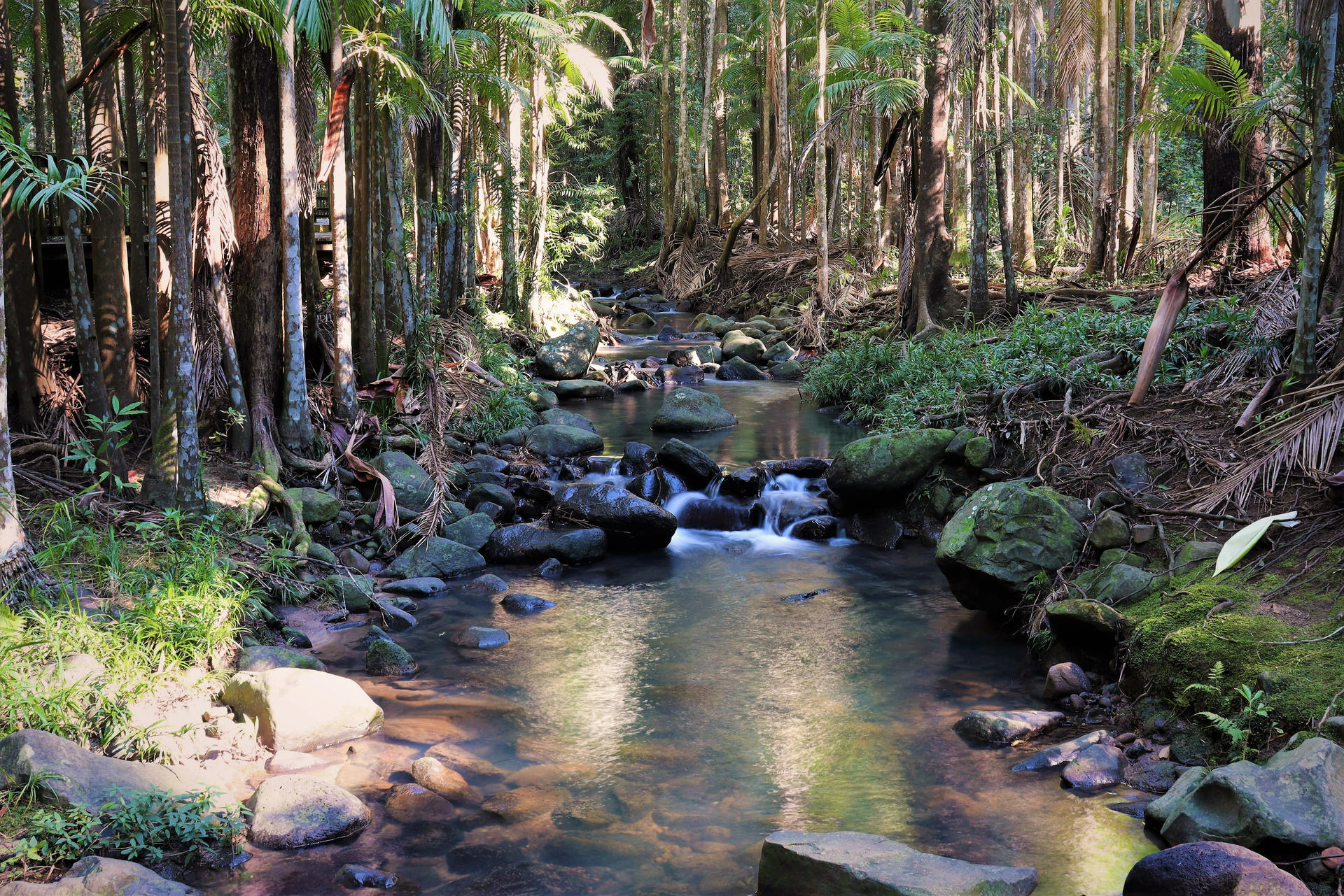 The Buderim Forest Waterfall No.5