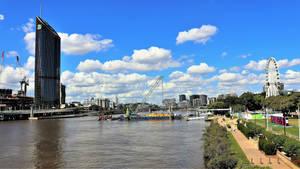 Brown Snake Brisbane River No.4