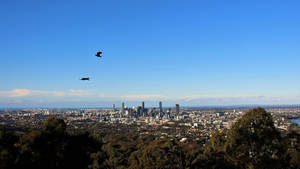 Mount Coot-Tha Summit Lookout No.5
