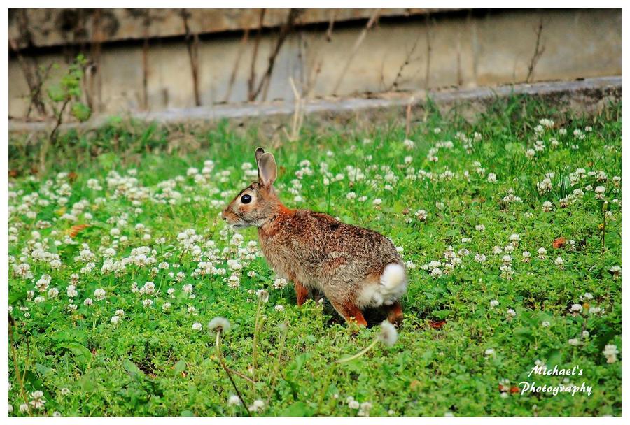 A Rabbit In My Yard by TheMan268 on DeviantArt