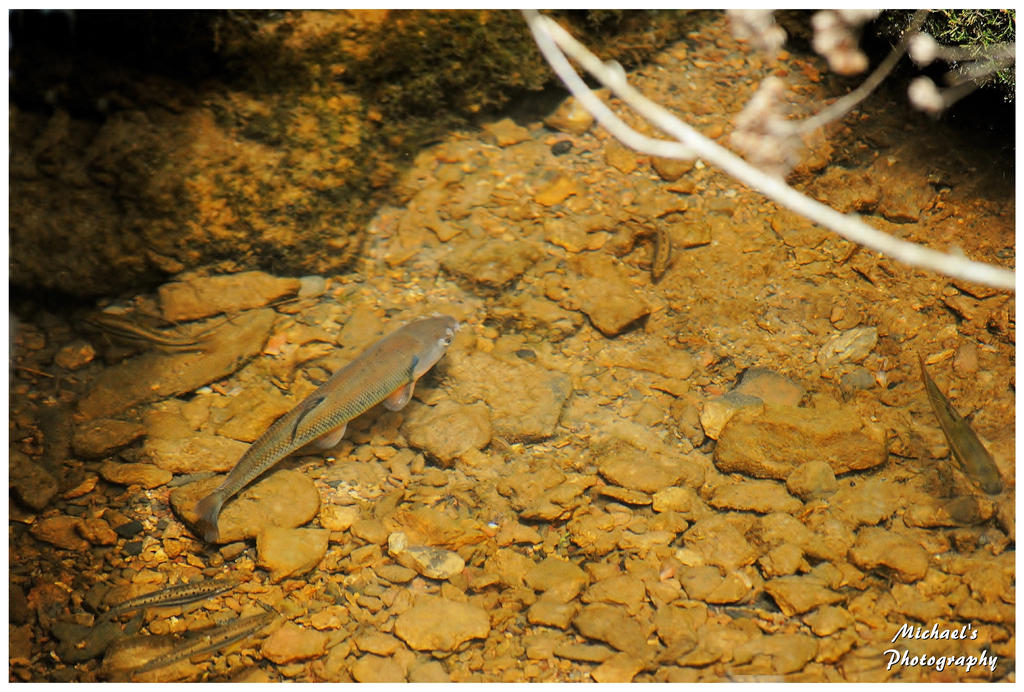 Some small fish in my creek 6 by theman268 on deviantart for Small creek fishing