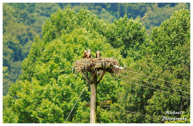 An Eagle's Nest by TheMan268