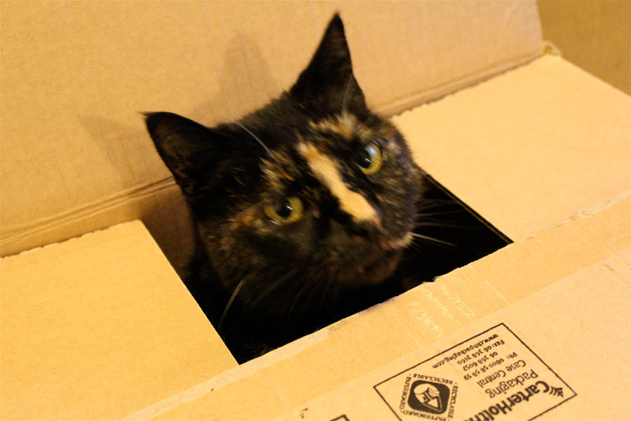 Cat in a Box by Applemac12