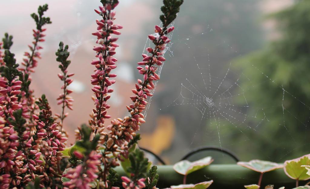 Dew Spiderweb by CaterinaOrlando