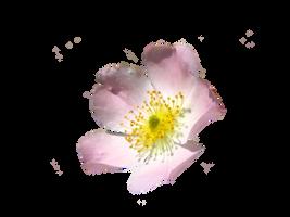 open flower png by spooky-dream