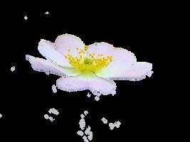 cute flower png by spooky-dream