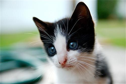 Kitty Kitty by Ausadriel