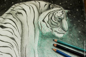 What do you see Richard Parker?