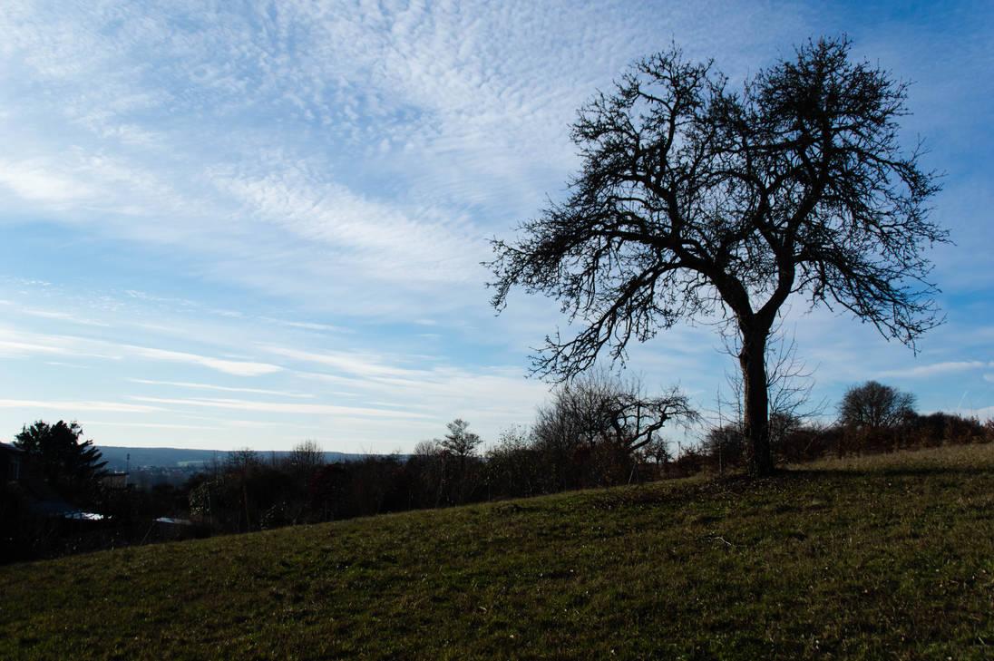 Tree and Sky by advdiaboli