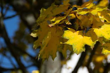 Tree Detail 2