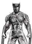 Wolverine - version 2 by gleidsonaraujo