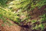Creek to nowhere