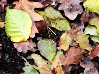 fall leafs by abfall