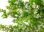 Flowery Tree 1