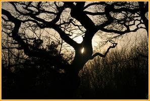 Sunny Oak by AranwA-Tari